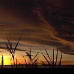 Une pluie d'or sur l'étang de l'Or thumbnail