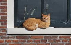 Amsterdam (Elisa1880) Tags: amsterdam noordholland nederland netherlands cat kat entrepotdok