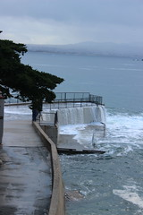 IMG_9762 (mudsharkalex) Tags: california pacificgrove pacificgroveca loverspointpark loverspointbeach beach