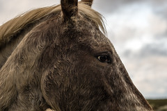 Right side (tonguedevil) Tags: outdoor outside countryside winter nature field sky cloud animal equine horse colour