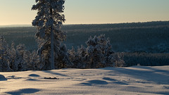 White Scenery (MrBlackSun) Tags: kuusamonaturephotography kuusamo hideout birds bird birdlover birdlovers eagle goldeneagle eaglehides nikond850 nikon winter forest finland lapland