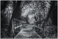 Footpath (akatsoulis) Tags: manfrotto park nikkor50mm14g d5300 nikon oxfordshire oxford medievalvillageofascot ascottpark fishpond fishpondatascottpark