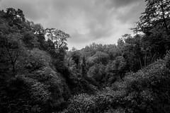Jungle, Laos (pas le matin) Tags: tree arbre landscape paysage world travel voyage forest forêt sky ciel clouds nuages asie asia southeastasia bw nb monochrome blackandwhite noiretblanc canon 7d canon7d canoneos7d eos7d jungle