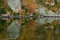 1:4 Mont Bégo Lakes: 'Lac Vert de Fontanalba' (AJ Mitchell) Tags: takumar50mmf14 castérino bronzeage liguritribe celtoligurians alpesmaritimes mercantour parcnationaldumercantour lac lake larch autumn golden water green reflection fontanalba