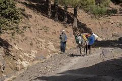 Marokko, Imlil (Jo&Ma) Tags: morocco marokko esel lastenträger berber toubkal imlil eselspfad