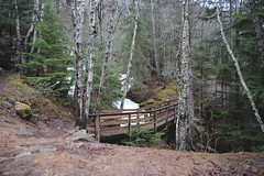(i threw a guitar at him.) Tags: alaska skagway klondike national park us trail hike bridge wooden path woods forest nature nps mountain hiking natur march 2019 early spring landscape scenic beauty beautiful birch snow frozen waterfall water fall ice