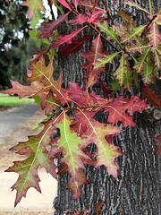 93/365 Autumn (retrokatz) Tags: 365the2019edition 3652019 day93365 03apr19