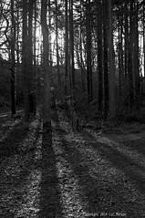 Christmas Day Walk (Spotmatix) Tags: 1855mm belgium brabantwallon camera effects forest hdr kr landscape lens monochrome pentax places seasons villerslaville winter zoomstd countryside uploaded lucmore