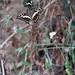 Ote Falls butterflies