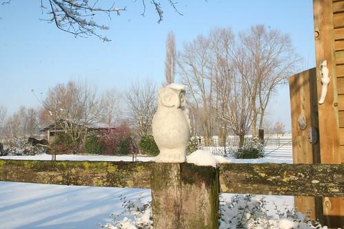 Sneeuwuil ;)