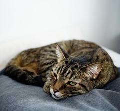 DSC03344 (iocatco) Tags: cat kitten cats sony a7