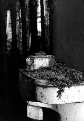 Mossy Bolt (MikeOB64) Tags: 35mm film analogue mono ilford fp4 pentax super me rust