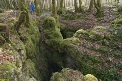 Entrée  de la Lésine du Champ Guillobot- Poligny - Jura (francky25) Tags: entrée de la lésine du champ guillobot poligny jura gouffre franchecomté
