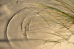 Mark of Nature (simonannable) Tags: fujifilmxt2 sand nature zen calm causality beach arc scribed marram grass wind blown dry sandy image background scene sweeping curves natural patterns wallart perfect scrying marks trails fujifilm delicate pattern action