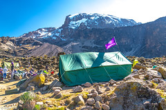 _FOU9630.jpg (Murray Foubister) Tags: 2018 gadventures spring mountainsm flora travel treking africa tanazania