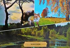 Soestdijk (Steenvoorde Leen - 14.2 ml views) Tags: ansichtkaart briefkaart card postcard kart postkarte cardar postal tarjeta carta korespodenzkarte correspodenzkarte brefort cartolina listek korespodencni old postcards geschiedenis historie history soestdijk nederland netherlands holland hollande olanda nederlanderna hollanda dieniederlande lespaysbas dieniederlandenederlandene