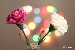 My 1st attempt at Bokeh photography (_PiXEL84_) Tags: bokeh flowers lights photography pink flower multicolour canon200d canon 200d canon50mmf18 50mm lens f18 bokehphotography