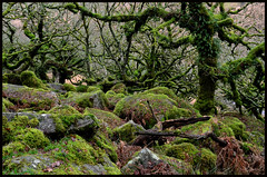 In The Land Of Strange 2. (curly42) Tags: wistmanswood devon dartmoor woodland countryside rocks dartmoornationalpark trees