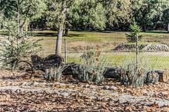 Between Loads (p) (davidseibold) Tags: america california chainlinkfence fence flower grass jfflickr leaf photosbydavid plant postedonflickr postedonmewe redding rock shastacounty tree unitedstates usa wheelbarrow