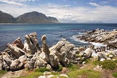 Penguin's Paradise (Stefan Zwi.) Tags: südafrika southafrica bettysbay penguins dassie pinguin klippschliefer landscape landschaft sky rocks felsen himmel ngc