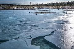 Ice Lake and the Dead Forest (Shigeo Kameshima) Tags: lake water seawater trees die snow ice living death abiessachalinensis syunkokutai hurenko happyplanet asiafavorites
