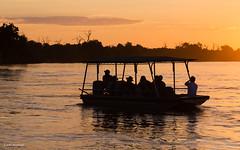 What is life (He Ro.) Tags: 2018 africa afrika botswana chobenp choberiver serondela southernafrica riverfront sunset sunsetboatcruise colours colourful mood silhouette river water chobe safari