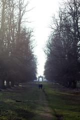 Charlecote walk (JW.Andrews) Tags: charlecote park nationaltrust national nature walking england warwickshire uk britian deer shadows