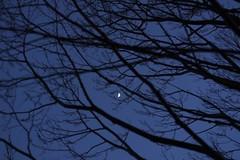 Chasing the moon 🌙 (lozhkinstas) Tags: newmoon night nightwalker moon 35mm