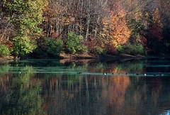 Eagle Creek Park, Indianapolis, Indiana (Roger Gerbig) Tags: 135 35mm transparency slidefilm pkl kodachrome200 ef28105mmf3545 canoneos3 rogergerbig autumn fallcolors lilylake indiana indianapolis eaglecreekpark