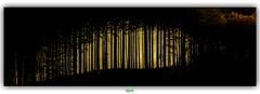 FORÊT DE SAINT-PRIX (régisa) Tags: morvan bourgogne tree arbre forest forêt saintprix aoi elitegalleryaoi bestcapturesaoi