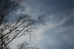 Evening Sky (gripspix) Tags: 20190216 schwenningen villingenschwenningen badenwürttemberg germany deutschland schwenningermoos hochmoor regenmoor moor bog renaturierung renaturalization tree baum silhouette sihluettes sky himmel stellagon128100mm iscogöttingen projektionsobjektiv projectionlens