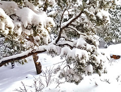 branch with snow
