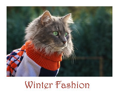 Winter fashion (FocusPocus Photography) Tags: fynn fynnegan katze kater cat chat gato tier animal haustier pet winter mode fashion pullover sweater jumper