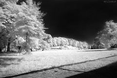 Dreamscape (B&W) (HiJinKs Media...) Tags: bristol blackwhite bw blancoynegro blackandwhite biancoenero infrared trees grass shadows shapes longexposure landscape dark light daydream dreamscape wind sky sun surreal bright branches crazytuesday