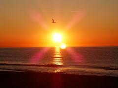 Primer amanecer 2019 (13) (calafellvalo) Tags: amaneceralbasolcalafellseaalbadasunrise amanecer sunrise amanecerdelaño2019 alba albada sea mar calafellvalo contraluz calafell aves gaviotas