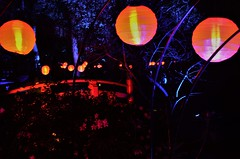 Enchanted Forest (ValmareAnne) Tags: beginner datenight amature christmaslight christmas light descancogardens garden enchantedforest date idea lacanada holiday holidayseason winter cold