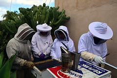 DSC_9763-61 (jjldickinson) Tags: nikond3300 107d3300 nikon1855mmf3556gvriiafsdxnikkor promaster52mmdigitalhdprotectionfilter longbeach bixbyknolls longbeachbeekeepers outreach class beeprepared insect bee honeybee apismellifera hive hiveinspection smoker dickbarnes