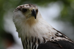 IMG_1487 (Stefan Kusinski) Tags: hemsley duncombe ncbp birdofprey