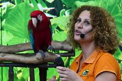 Green Winged Macaw [5] (Ian R. Simpson) Tags: greenwingedmacaw macaw parrot bird loroparque zoo tenerife canaryislands spain puertodelacruz lady trainer handler