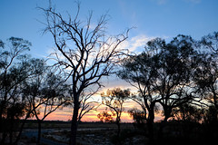 Mildura, Australia -  sunset (Marian Pollock) Tags: australia silhouette trees sun sunset colourful sky clouds mildura gumtrees outback