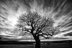 Winter Tree (l4ts) Tags: landscape derbyshire barlowlees tree oaktree farmland cloudscape clouds blackwhite monochrome