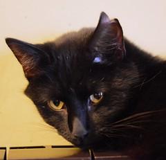 ... didn't kill the cat (Clint__Budd) Tags: 52in2019challenge curiosity cat tom