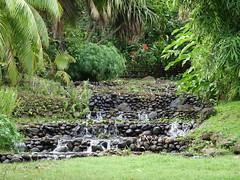 Polynésie 2019 - Tahiti (Valerie Hukalo) Tags: tahiti archipeldelasociété valériehukalo hukalo polynésiefrançaise frenchpolynesia océanpacifique pacificocean océanie oceania flore flower fleur jardinbotanique
