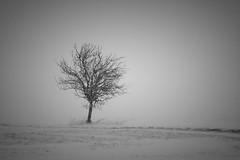 Lonely Tree (qaxwkhlm1) Tags: canon january januar bavaria bayern calm minimalismus minimalism schwarzweis bw lonely baum tree stormy