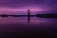 LochravenNightclrs-0946 (york13d) Tags: landscapephotography water sunset tree sky nikkor landscapelovers nikon nature naturephotography light beautiful