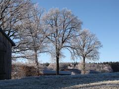 Cold, but beautiful! (elisabeth.mcghee) Tags: eis frost frozen unterbibrach oberpfalz upper palatinate bäume trees scheune barn gras landschaft landscape