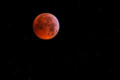 Lunar Eclipse 2019 Totality - Lunar in Stars (Tej Dyal) Tags: lunar eclipse totality stars january 2019 500mm 80mm