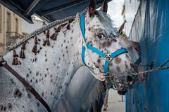 DSCF0950 (alexanderjblair) Tags: 2018 may spain bullfight