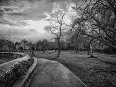 Waterloo Gardens (garethedwards36) Tags: waterloo gardens garden park urban roath cardiff wales uk monochrome panasonic lumix affinityphoto