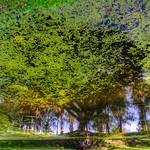Duckweed-Leafe-Tree thumbnail